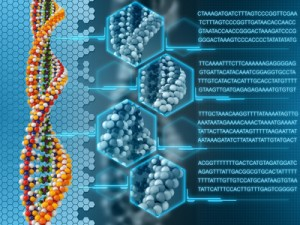 Genetik Fruchtbarkeit
